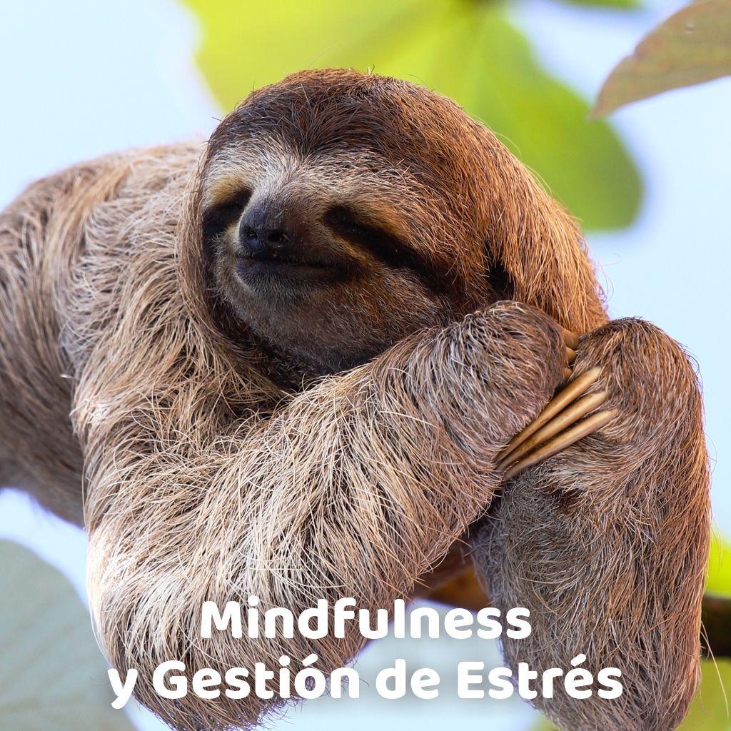 Mindfullness y Gestión del Stress