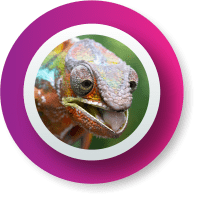 camaleon_nuevo